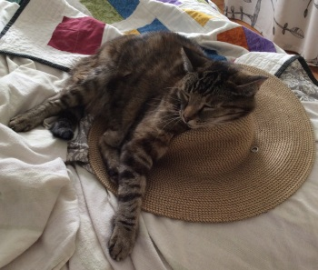Cat and sun hat