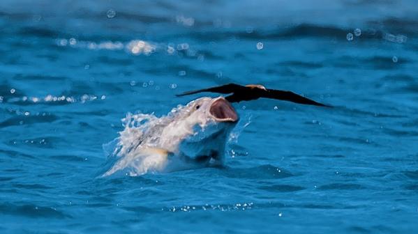 fish eating bird